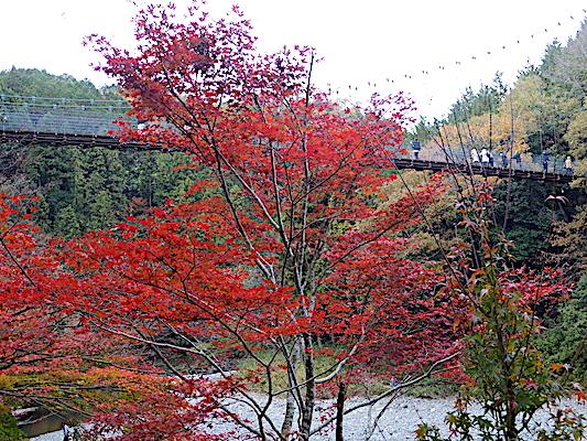渓谷「多良峡(たらきょう)」紅葉